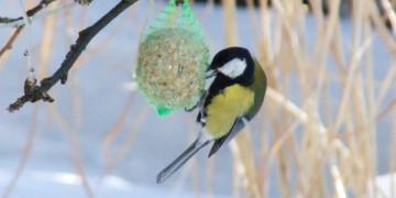 vogelfutter-selber-machen