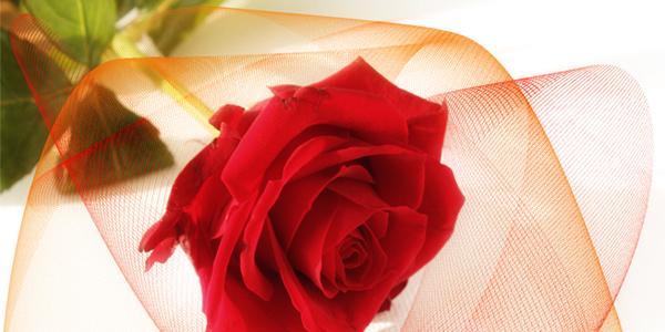 wann rosen schneiden rosenschnitt anleitung gro e auswahl. Black Bedroom Furniture Sets. Home Design Ideas